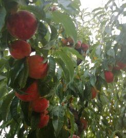 Pomăria Bădăcin
